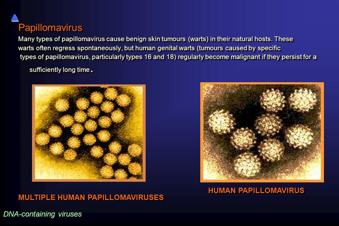 Papillomavirus HUMAN PAPILLOMAVIRUS MULTIPLE HUMAN PAPILLOMAVIRUSES
