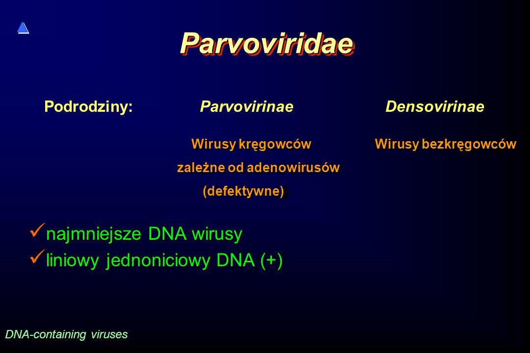 Parvoviridae najmniejsze DNA wirusy liniowy jednoniciowy DNA (+)