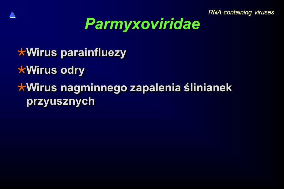 Parmyxoviridae Wirus parainfluezy Wirus odry
