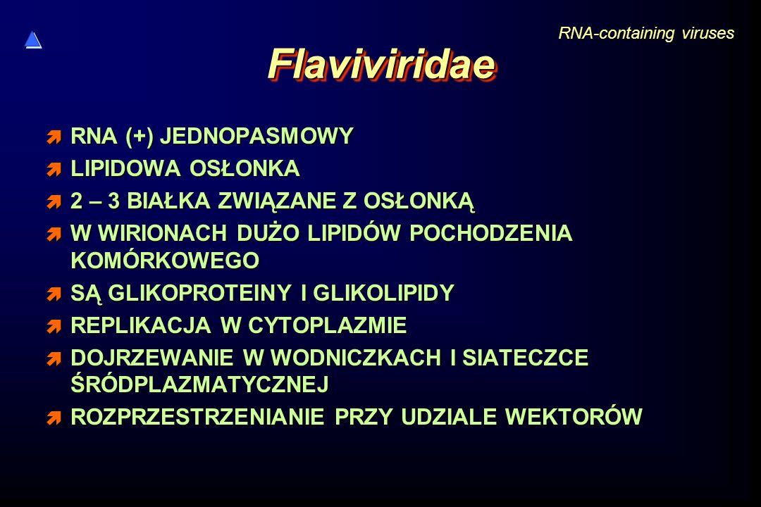 Flaviviridae RNA (+) JEDNOPASMOWY LIPIDOWA OSŁONKA