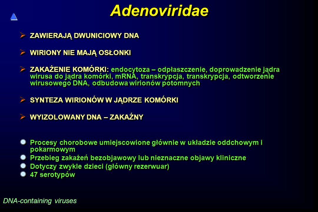 Adenoviridae ZAWIERAJĄ DWUNICIOWY DNA WIRIONY NIE MAJĄ OSŁONKI
