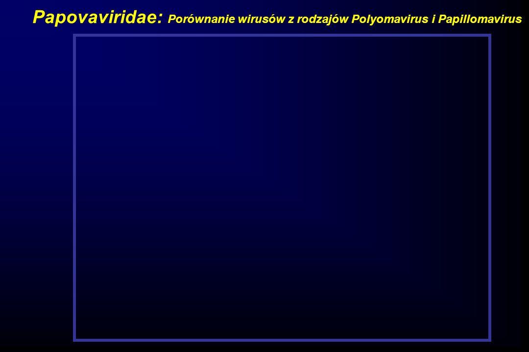 Papovaviridae: Porównanie wirusów z rodzajów Polyomavirus i Papillomavirus