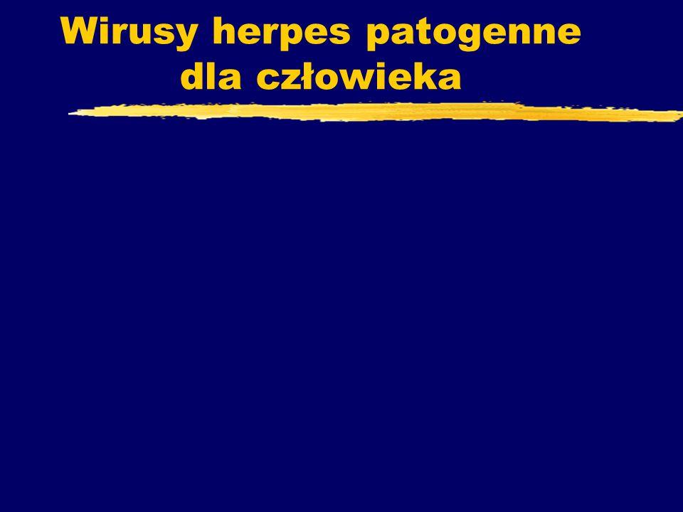 Wirusy herpes patogenne dla człowieka
