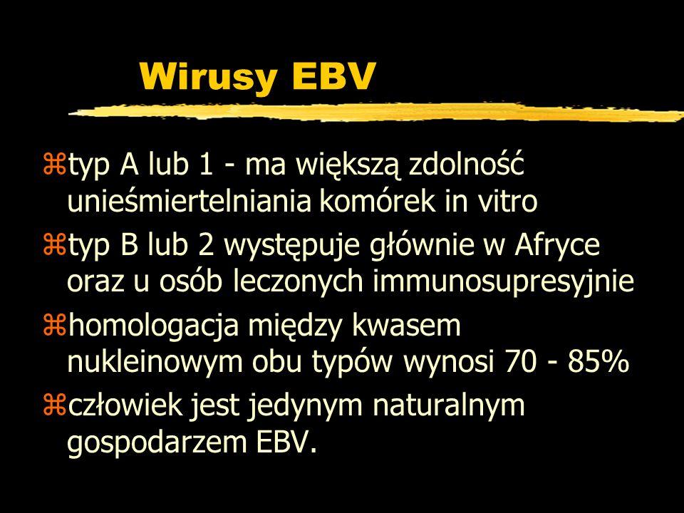 Wirusy EBV typ A lub 1 - ma większą zdolność unieśmiertelniania komórek in vitro.