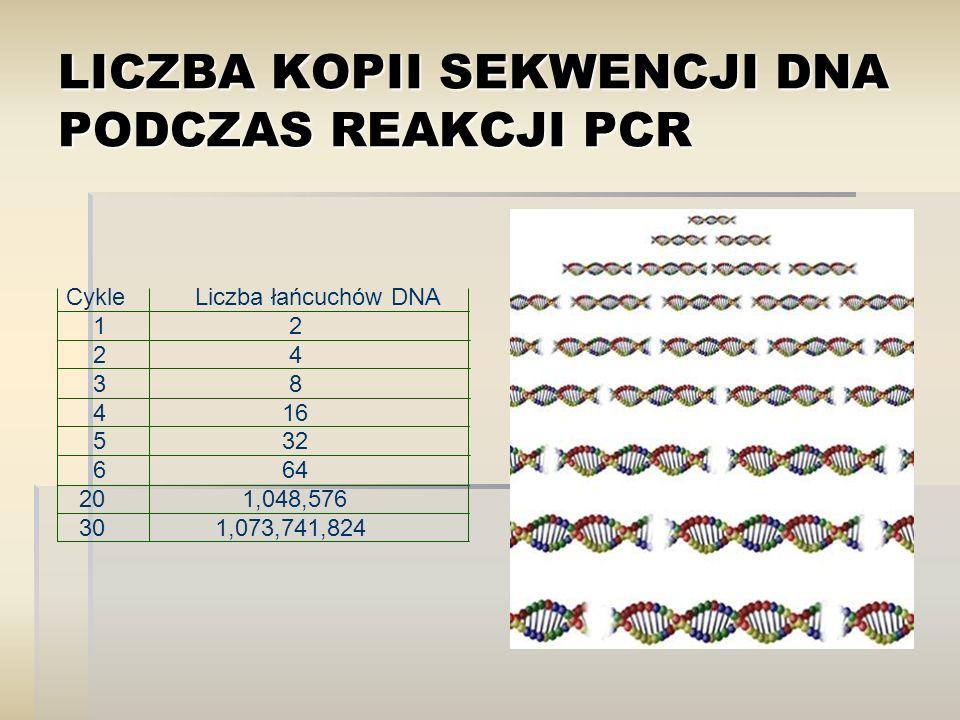 LICZBA KOPII SEKWENCJI DNA PODCZAS REAKCJI PCR