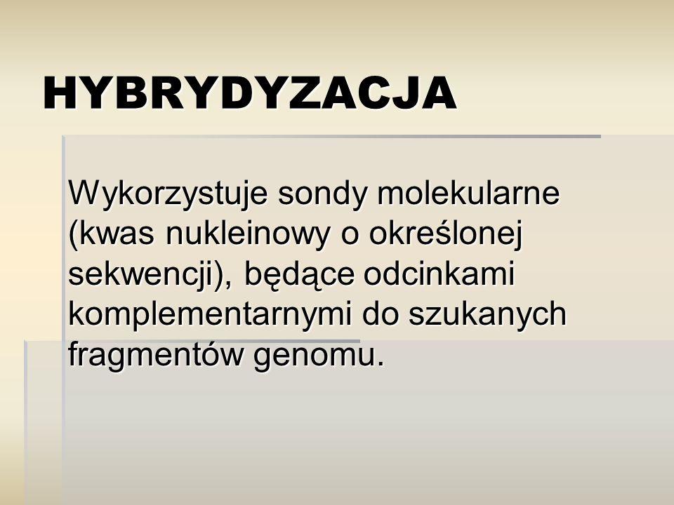 HYBRYDYZACJA