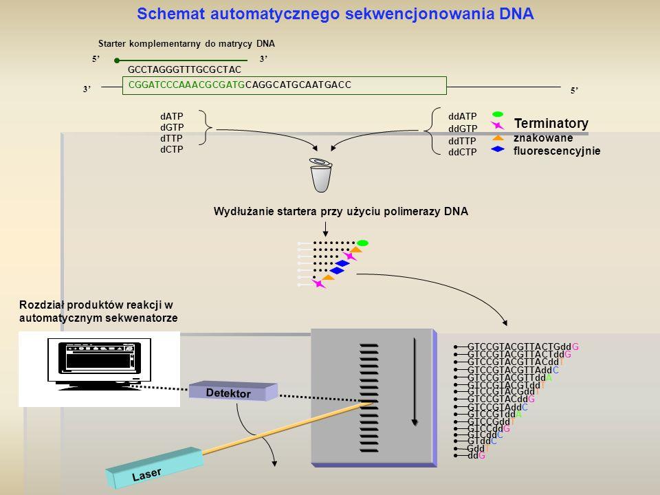 Schemat automatycznego sekwencjonowania DNA
