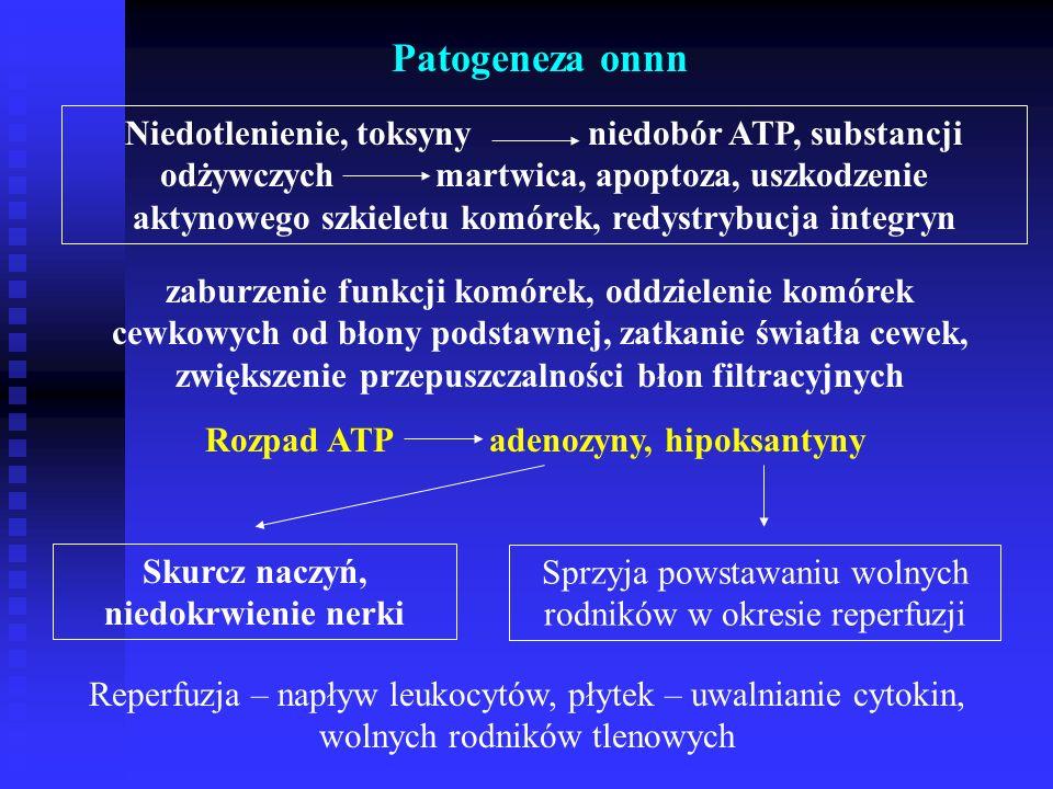Rozpad ATP adenozyny, hipoksantyny Skurcz naczyń, niedokrwienie nerki