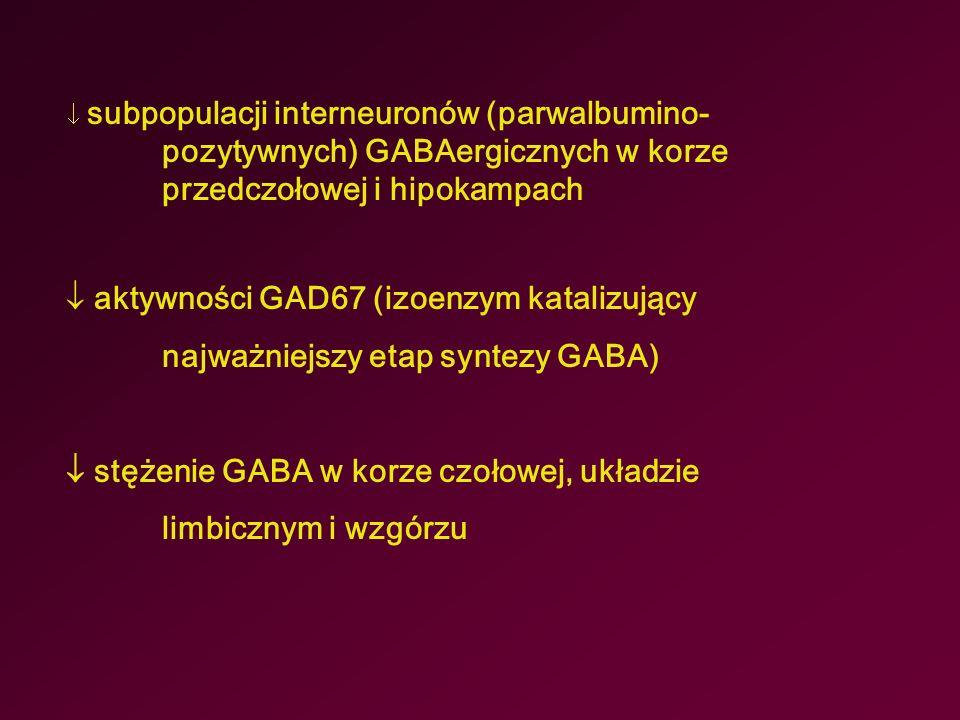  stężenie GABA w korze czołowej, układzie limbicznym i wzgórzu