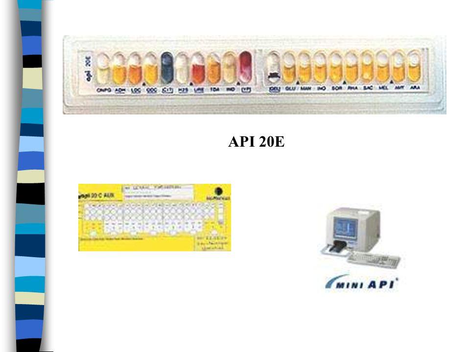 API 20E