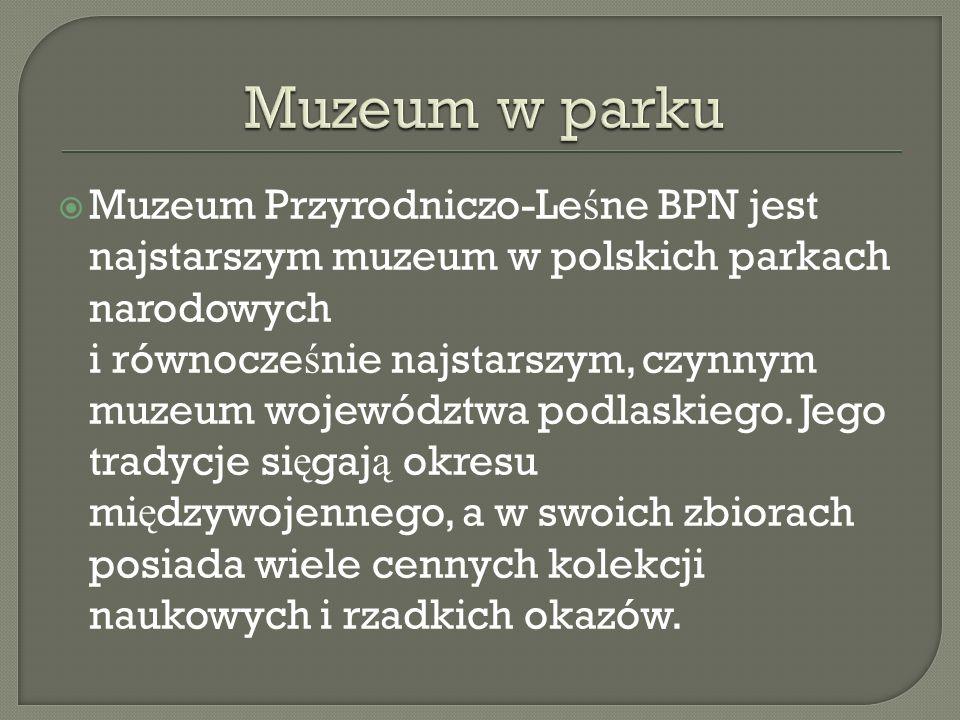 Muzeum w parku