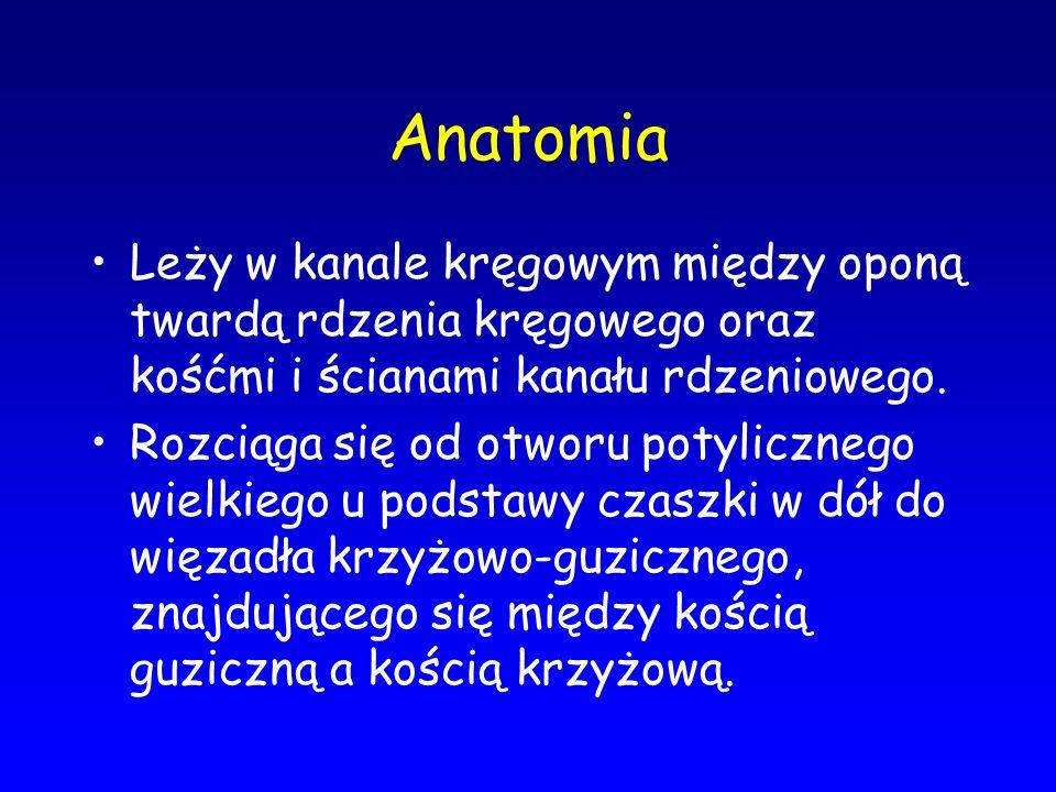 Anatomia Leży w kanale kręgowym między oponą twardą rdzenia kręgowego oraz kośćmi i ścianami kanału rdzeniowego.