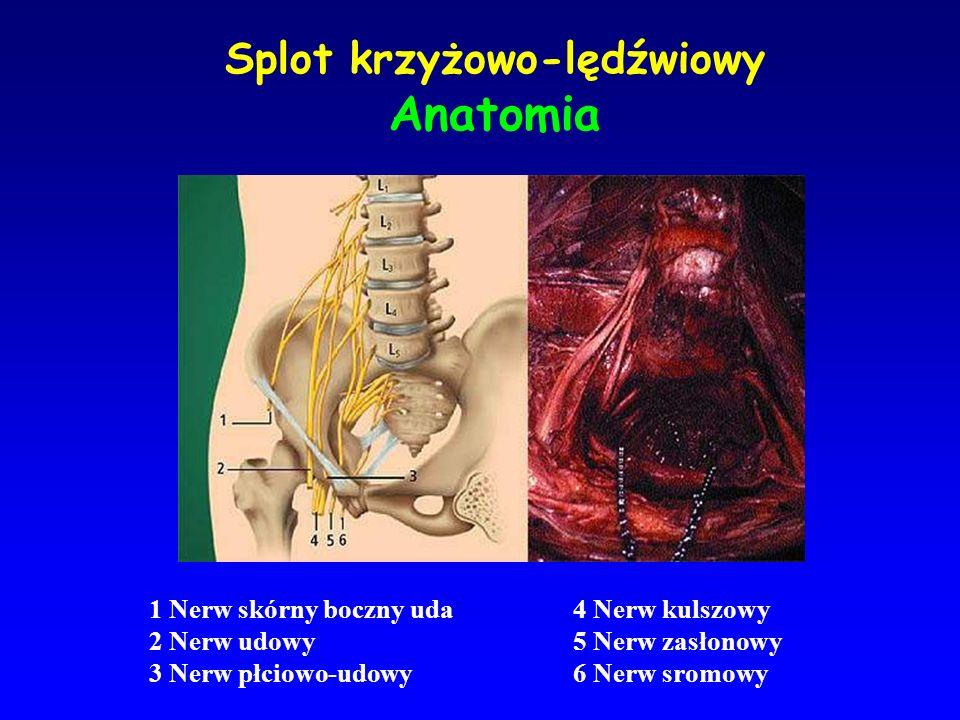 Splot krzyżowo-lędźwiowy Anatomia