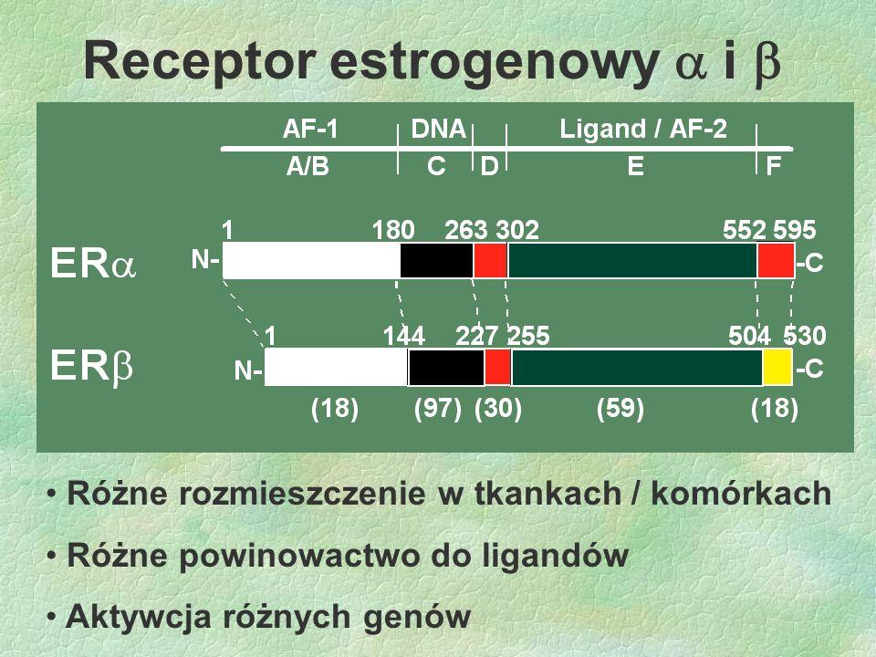 Receptor estrogenowy  i 