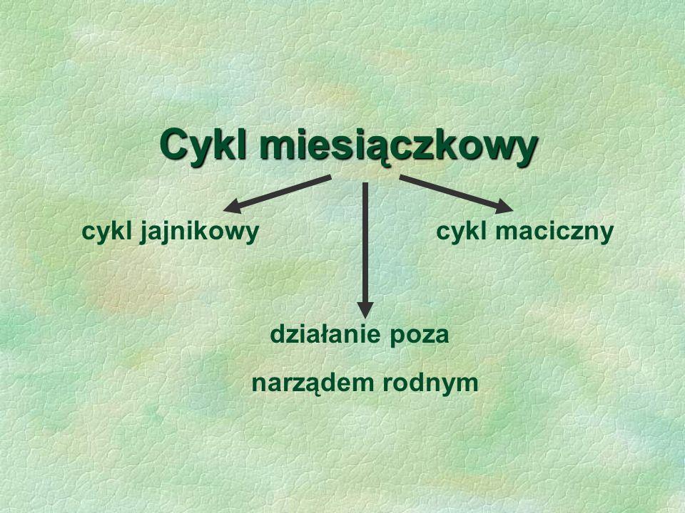 Cykl miesiączkowy cykl jajnikowy cykl maciczny narządem rodnym