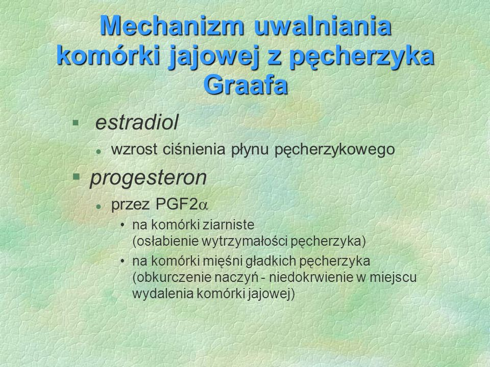 Mechanizm uwalniania komórki jajowej z pęcherzyka Graafa