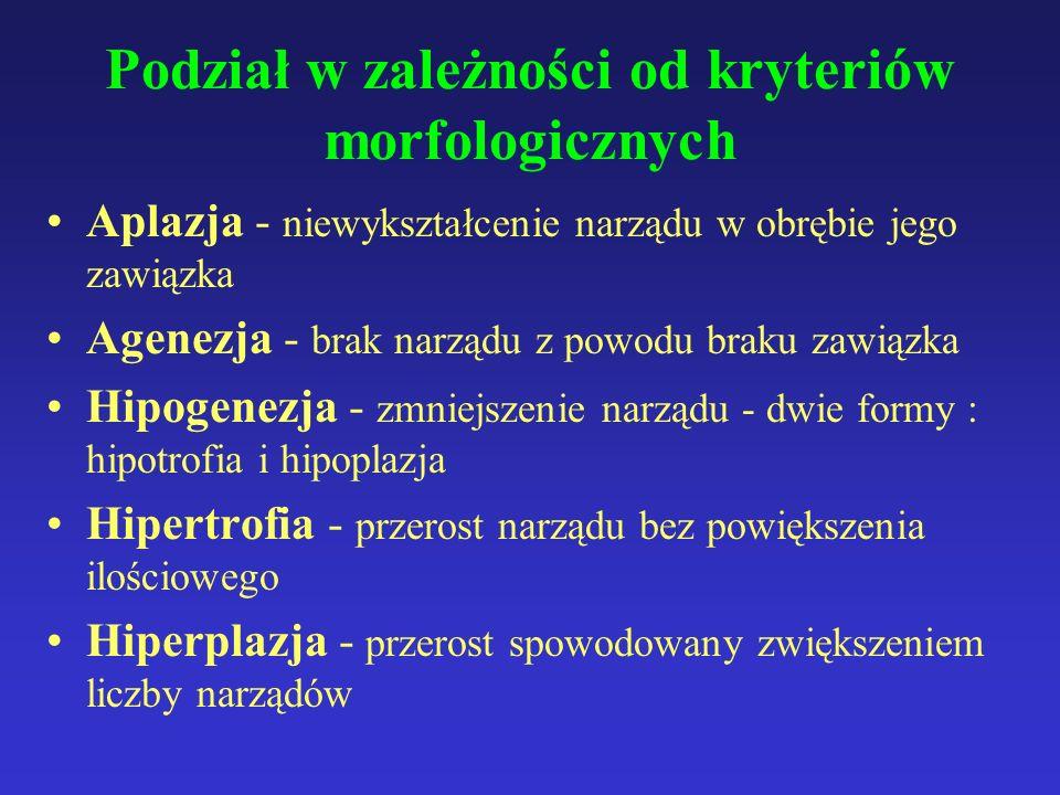 Podział w zależności od kryteriów morfologicznych