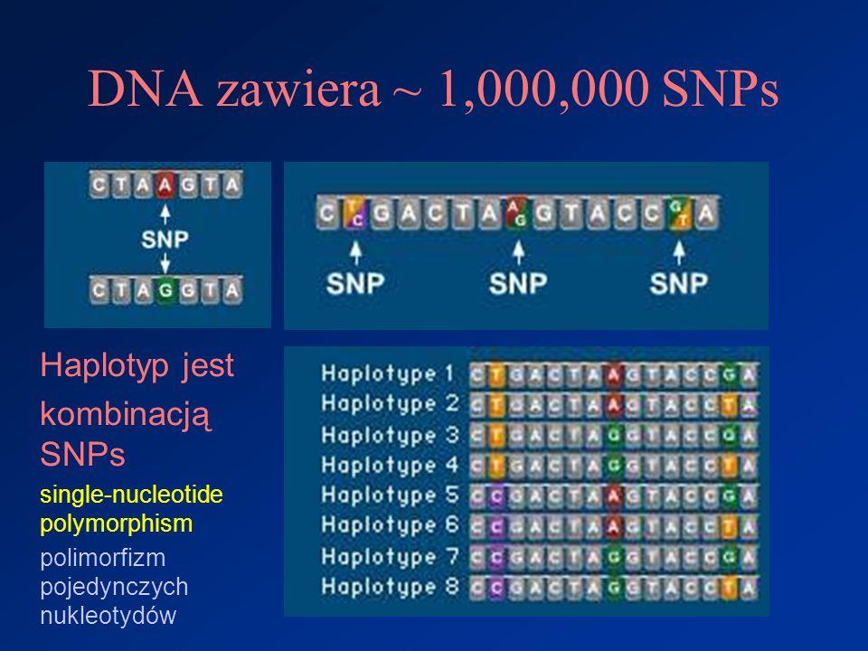 DNA zawiera ~ 1,000,000 SNPs Haplotyp jest kombinacją SNPs