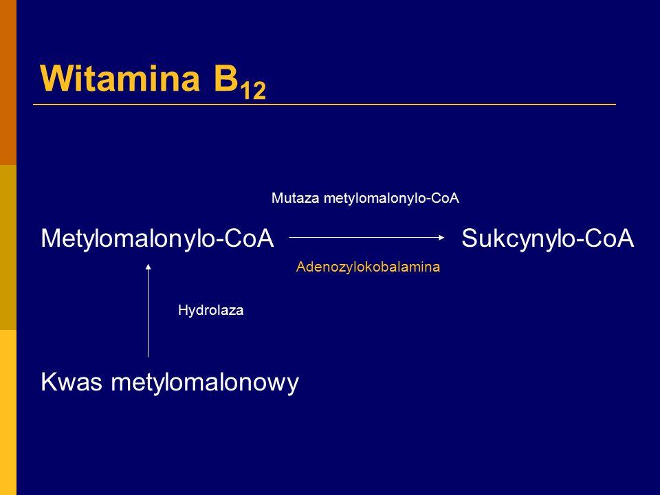 Witamina B12 Hydrolaza Metylomalonylo-CoA Sukcynylo-CoA