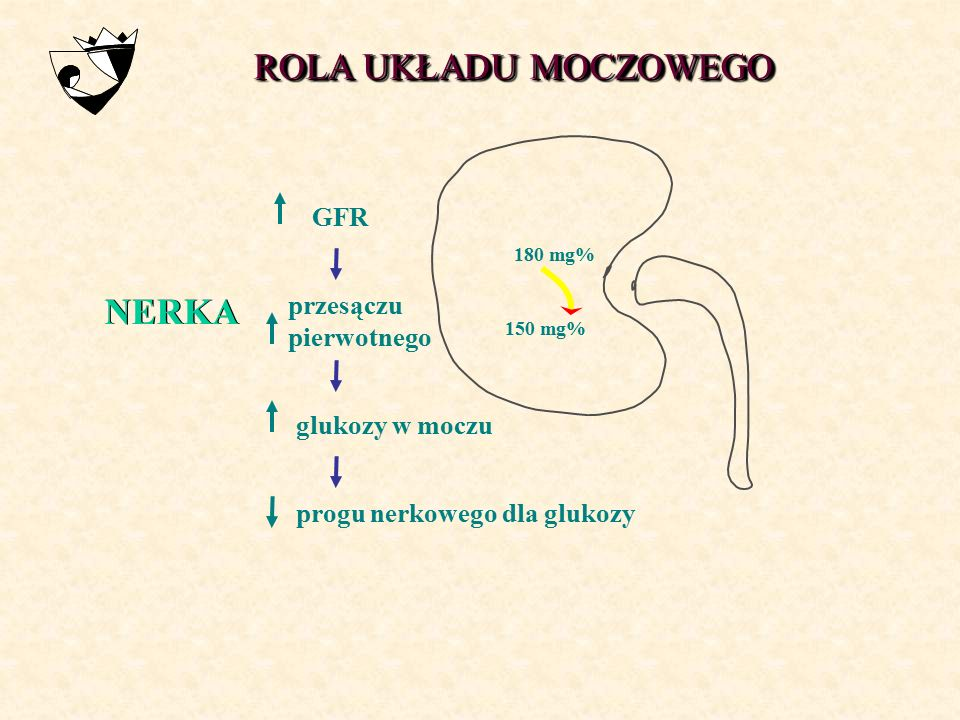 ROLA UKŁADU MOCZOWEGO NERKA GFR przesączu pierwotnego glukozy w moczu