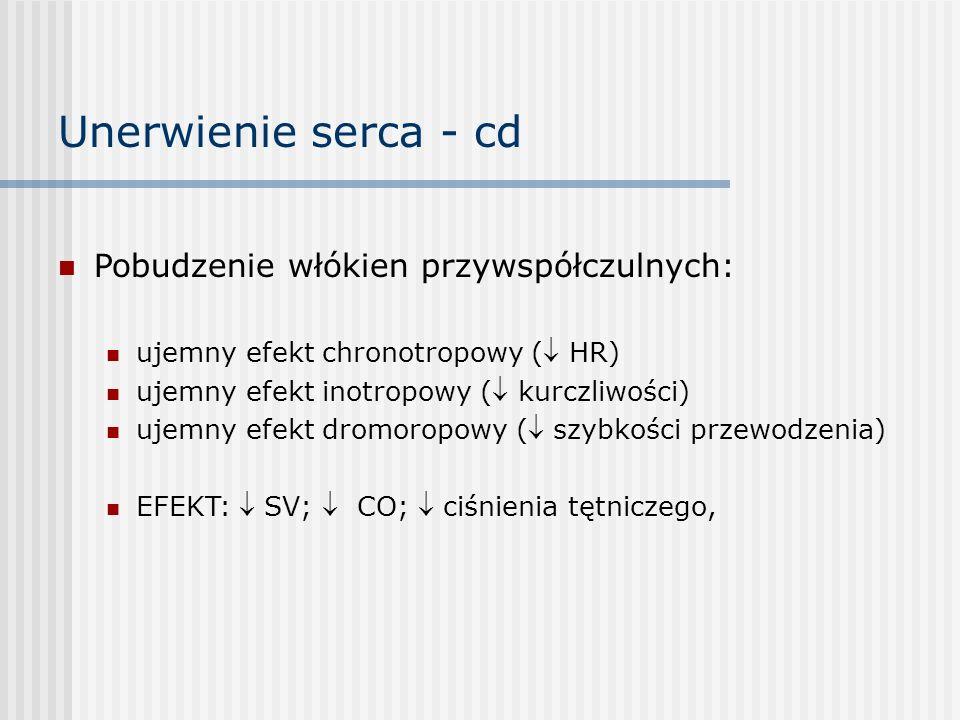 Unerwienie serca - cd Pobudzenie włókien przywspółczulnych: