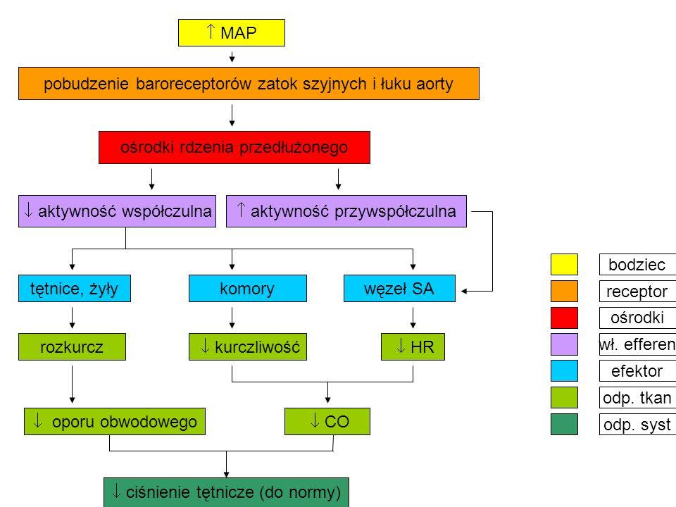 pobudzenie baroreceptorów zatok szyjnych i łuku aorty