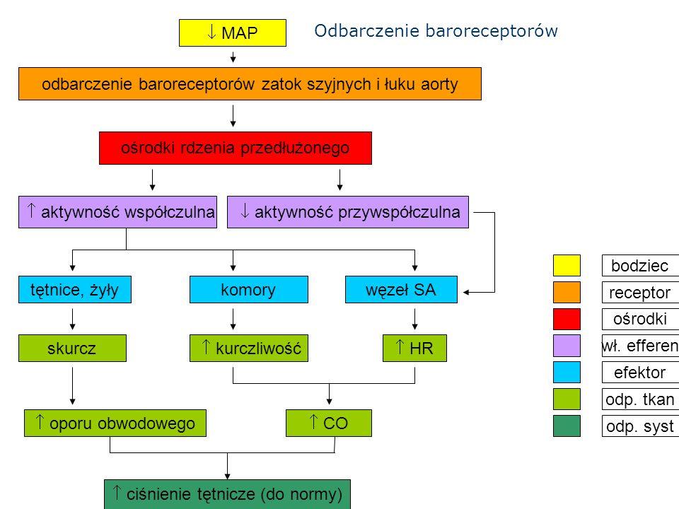 Odbarczenie baroreceptorów  MAP