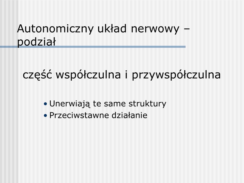 Autonomiczny układ nerwowy – podział