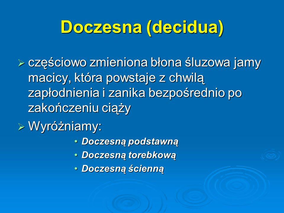 Doczesna (decidua) częściowo zmieniona błona śluzowa jamy macicy, która powstaje z chwilą zapłodnienia i zanika bezpośrednio po zakończeniu ciąży.
