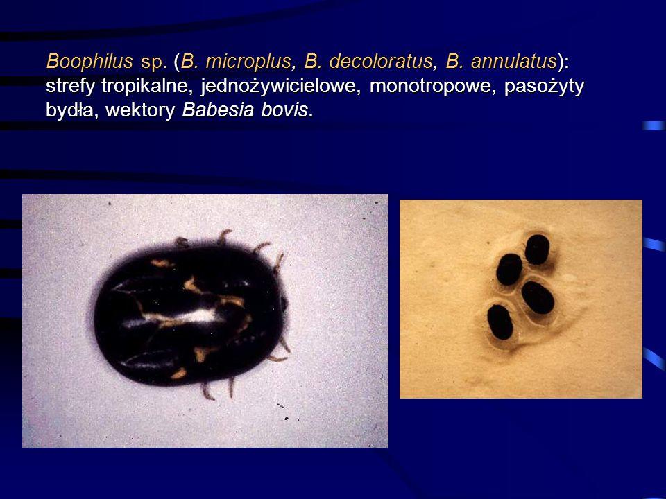 Boophilus sp. (B. microplus, B. decoloratus, B