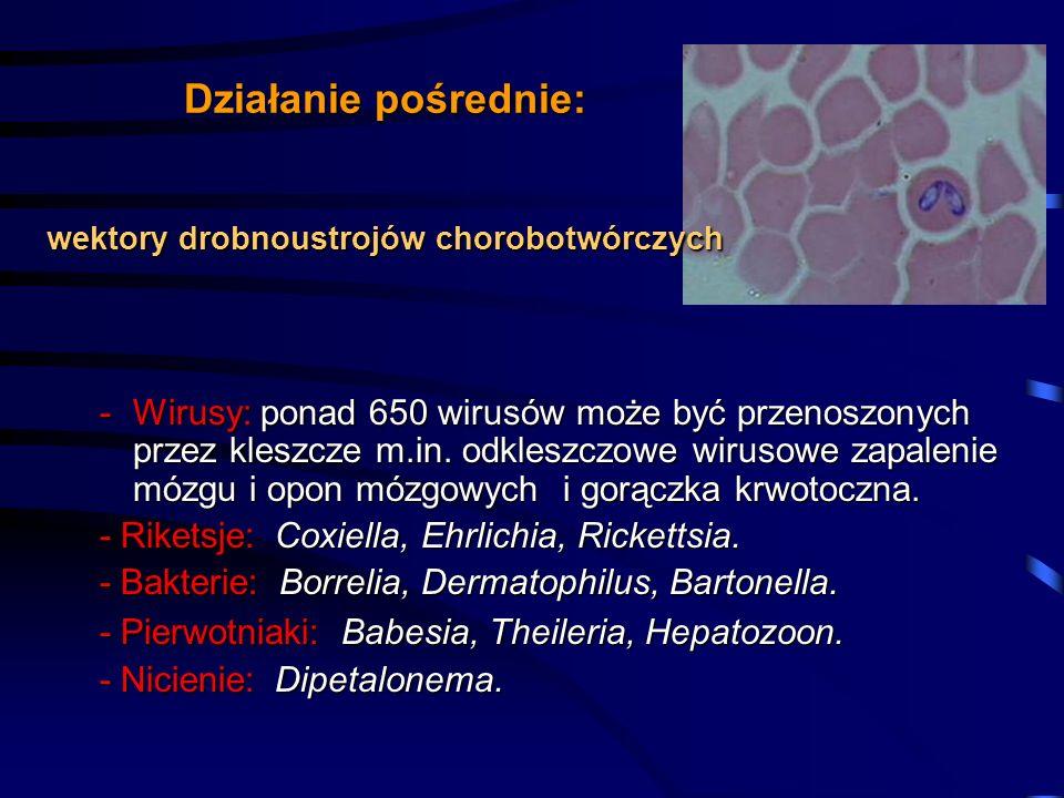 Działanie pośrednie: wektory drobnoustrojów chorobotwórczych.