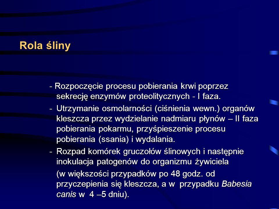 Rola śliny - Rozpoczęcie procesu pobierania krwi poprzez sekrecję enzymów proteolitycznych - I faza.