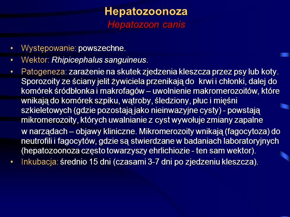 Hepatozoonoza Hepatozoon canis