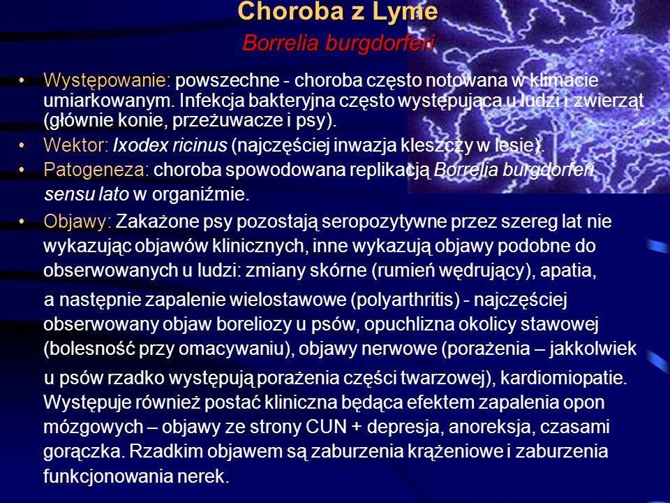 Choroba z Lyme Borrelia burgdorferi