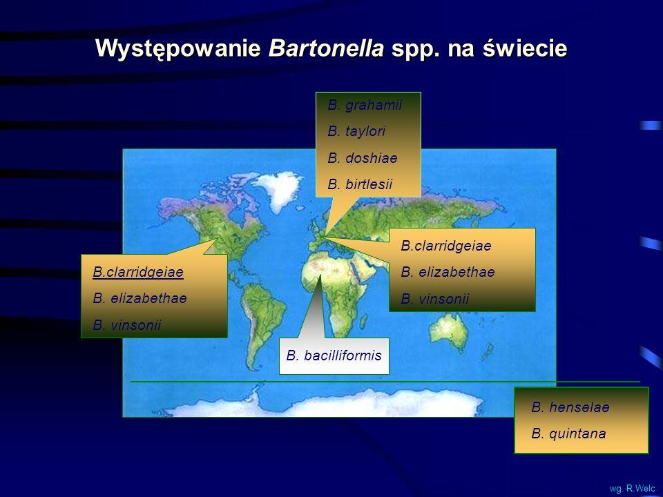 Występowanie Bartonella spp. na świecie