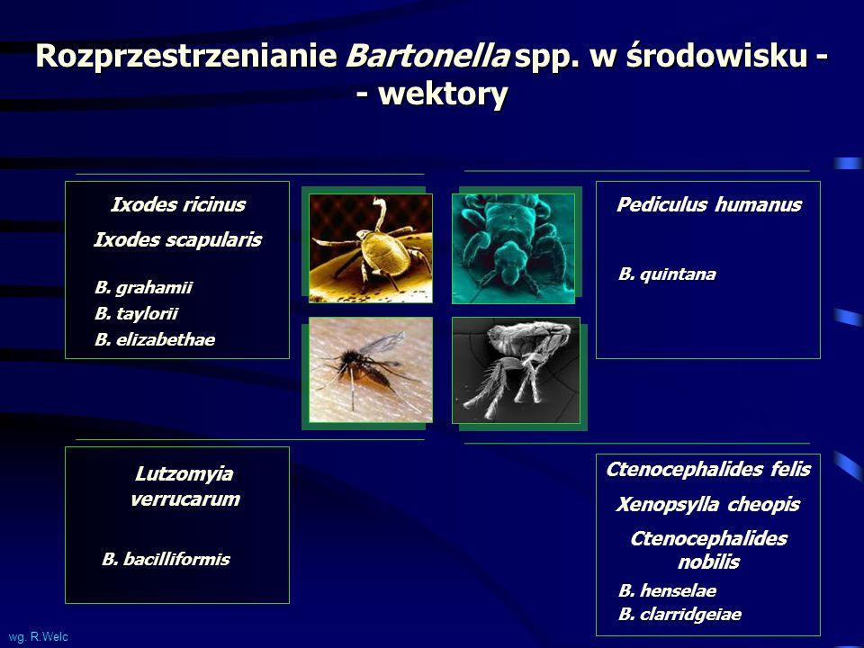 Rozprzestrzenianie Bartonella spp. w środowisku - - wektory