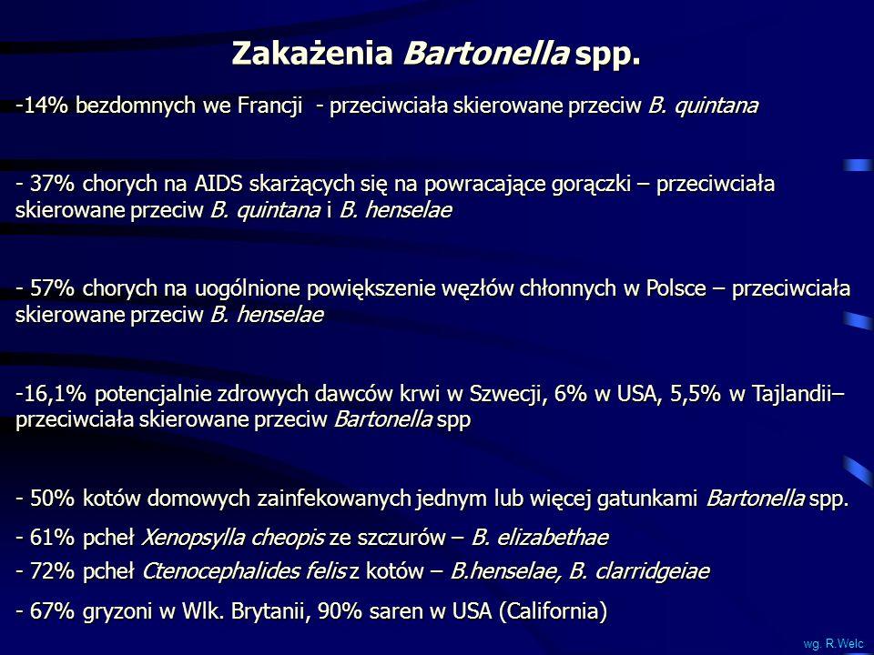 Zakażenia Bartonella spp.