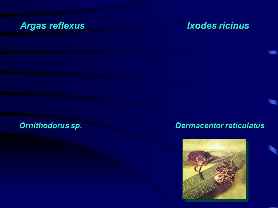 Argas reflexus Ixodes ricinus