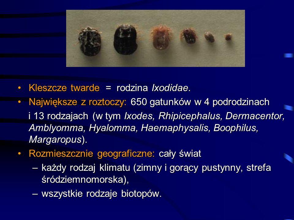 Kleszcze twarde = rodzina Ixodidae.