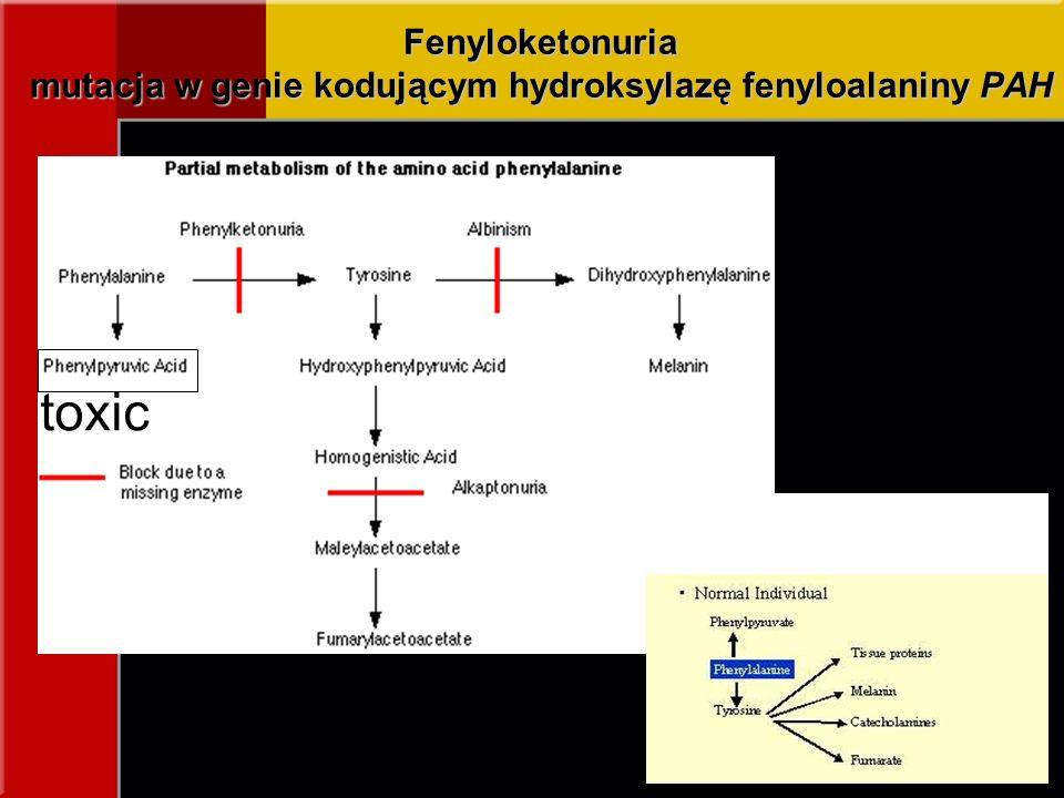 Fenyloketonuria mutacja w genie kodującym hydroksylazę fenyloalaniny PAH