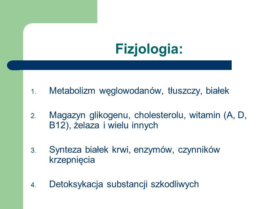 Fizjologia: Metabolizm węglowodanów, tłuszczy, białek