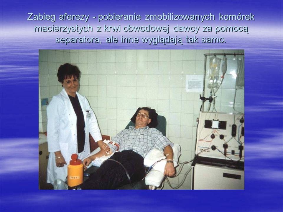 Zabieg aferezy - pobieranie zmobilizowanych komórek macierzystych z krwi obwodowej dawcy za pomocą separatora, ale inne wyglądają tak samo.