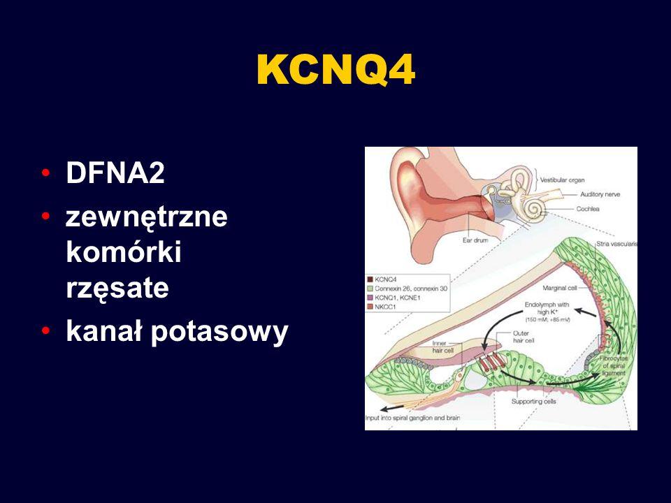 KCNQ4 DFNA2 zewnętrzne komórki rzęsate kanał potasowy
