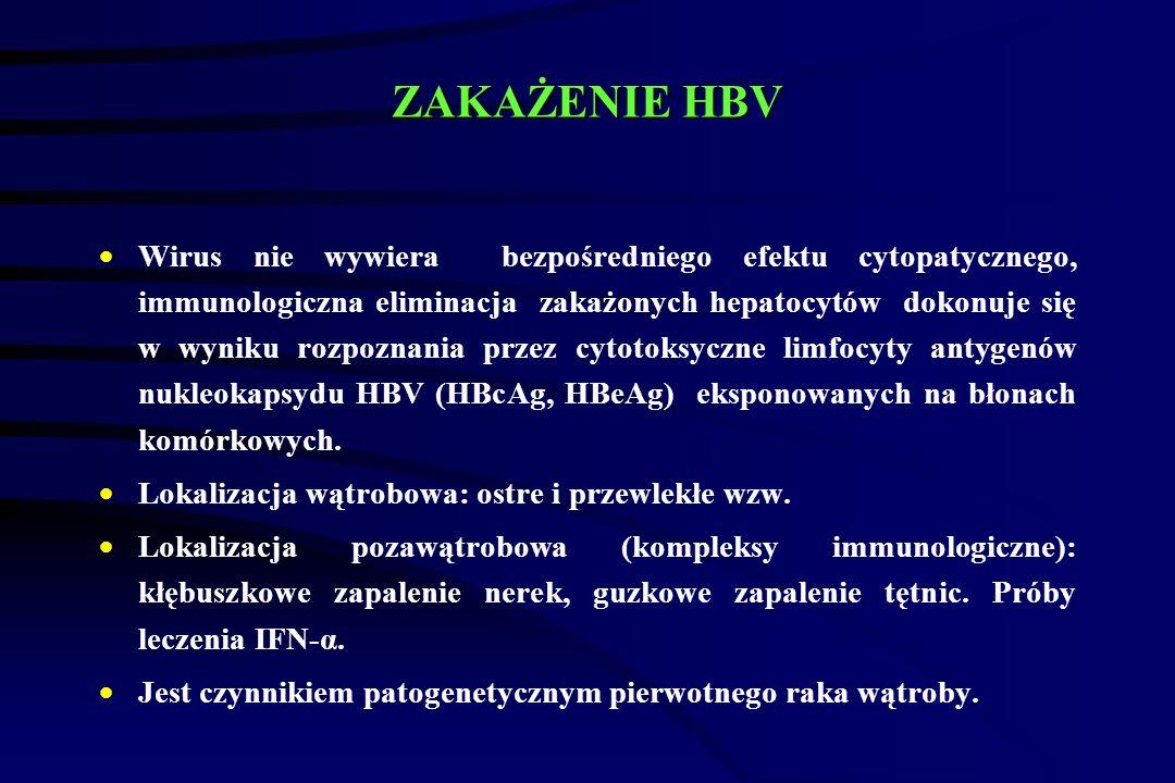 ZAKAŻENIE HBV