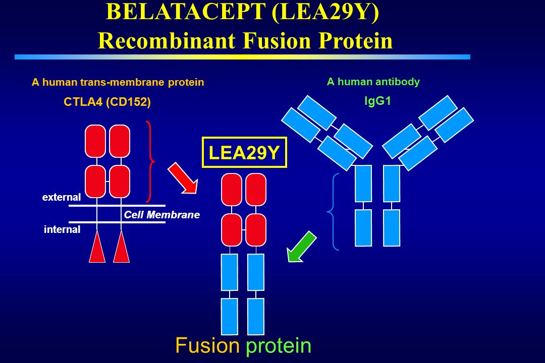 BELATACEPT (LEA29Y) Recombinant Fusion Protein
