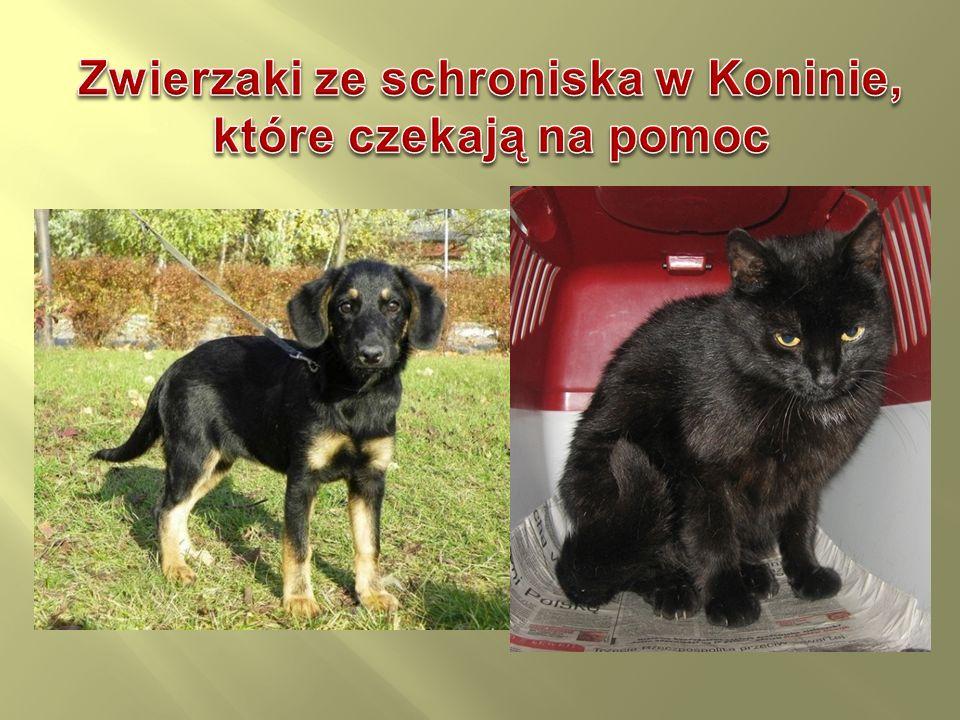 Zwierzaki ze schroniska w Koninie, które czekają na pomoc