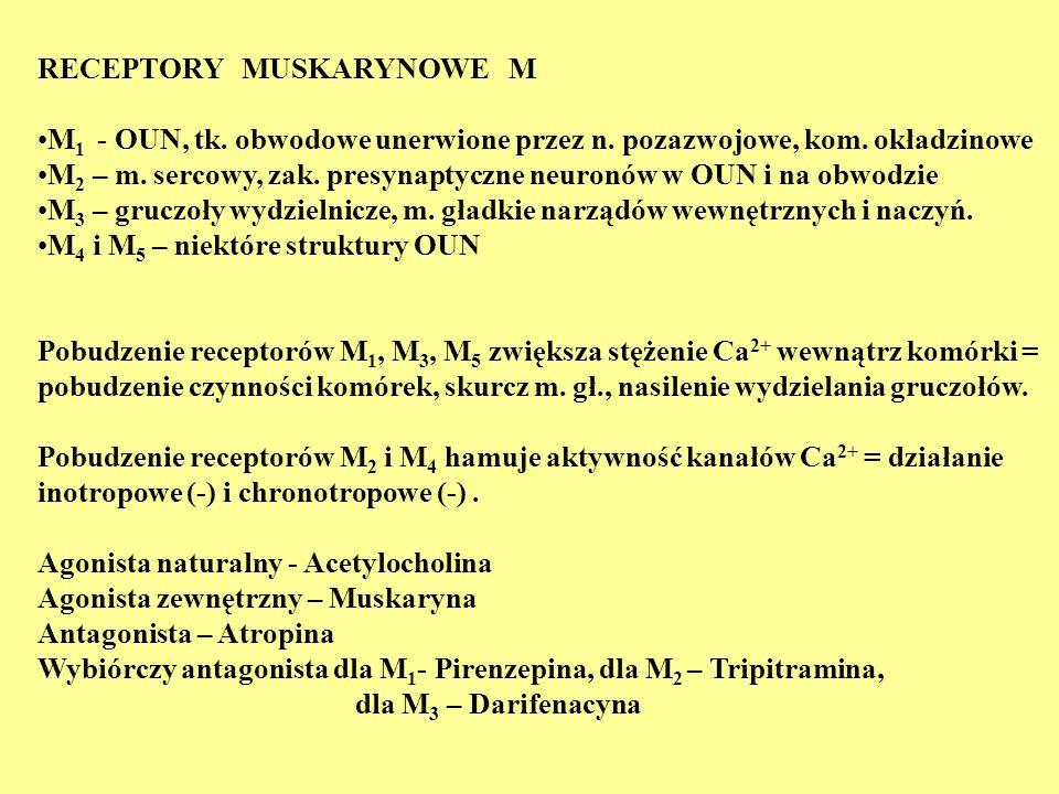 RECEPTORY MUSKARYNOWE M