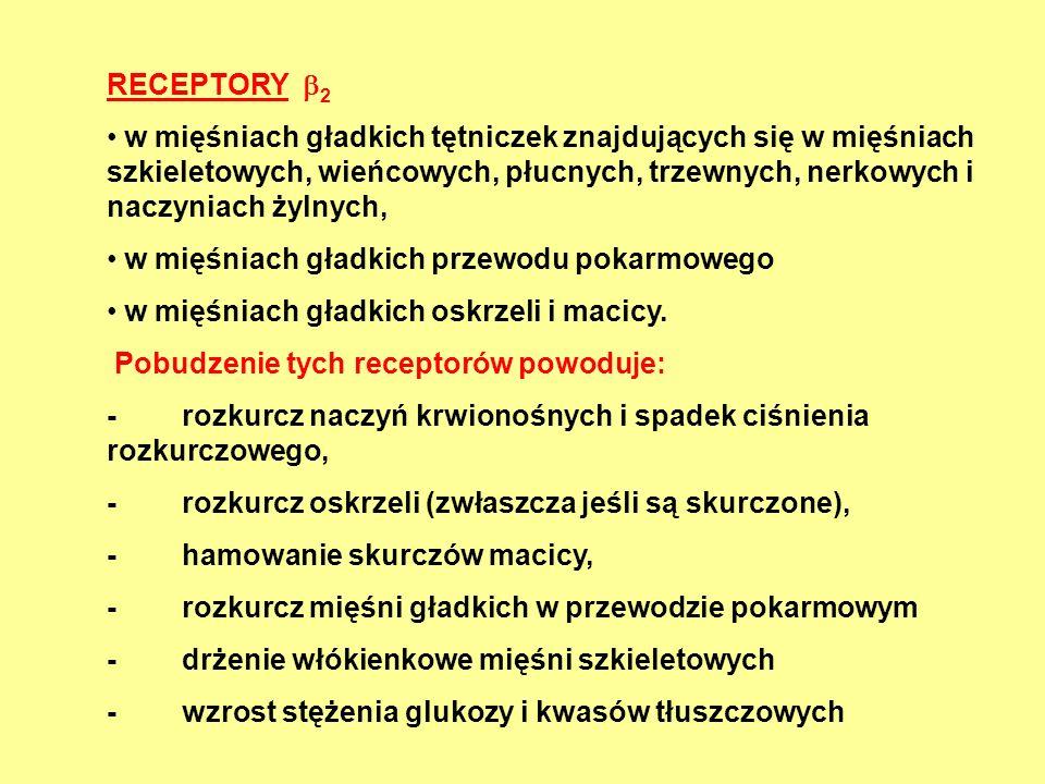 RECEPTORY 2