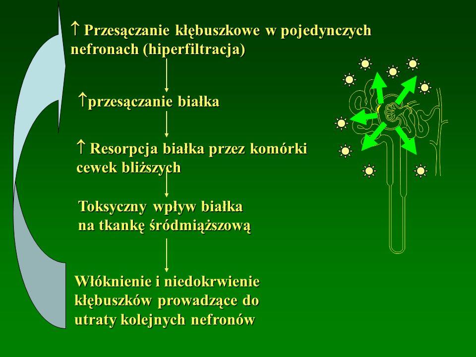  Przesączanie kłębuszkowe w pojedynczych nefronach (hiperfiltracja)