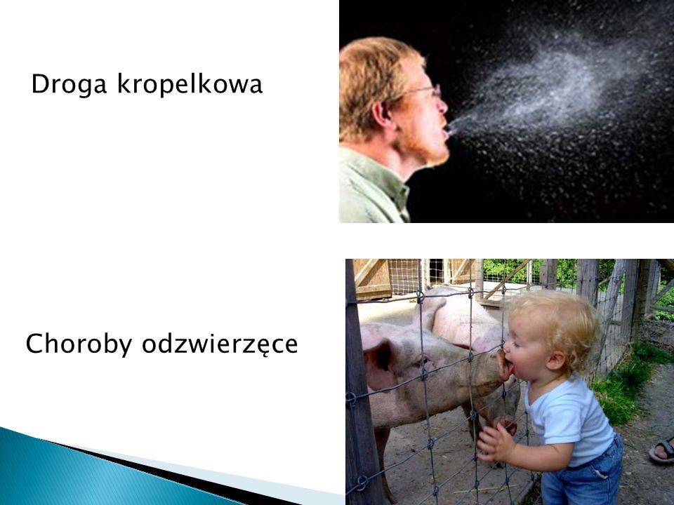 Droga kropelkowa Choroby odzwierzęce